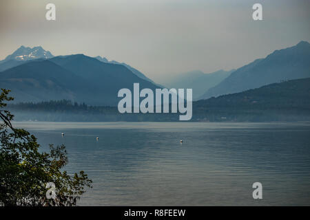 tree arching over the waters of puget sound in washington with mountains in background - Stock Photo