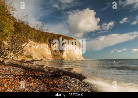 Chalk cliffs on Rügen island in the Jasmund National Park in autumn mood. Blue sky with clouds in sunshine. A dead tree trunk lies in the foreground. - Stock Photo