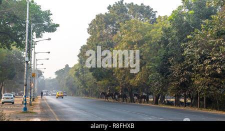 December 13,2018. Kolkata, India. Police surgeons Of kolkata Police crossing Red Road on their horses on misty morning .