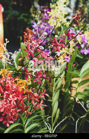 Orchid bundles are displayed for sale in the market. - Stock Photo