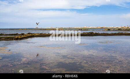 A seagull flying over the saline with Trapani skyline on the background, Sicily, Italy - Stock Photo