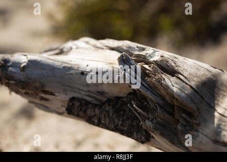 A large piece of driftwood on the beach at Kettle Cove in Cape Elizabeth, Maine. - Stock Photo