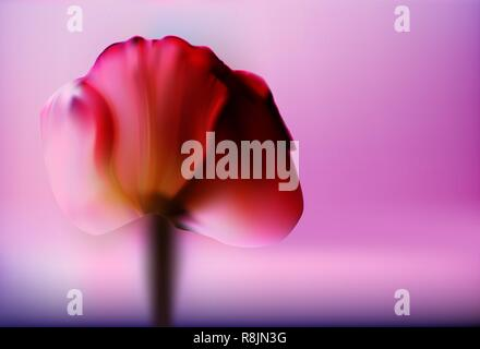 Precious red flower Tulip on a blurred gold background romantic Valentine's day. Romantic and gentle abstract background.