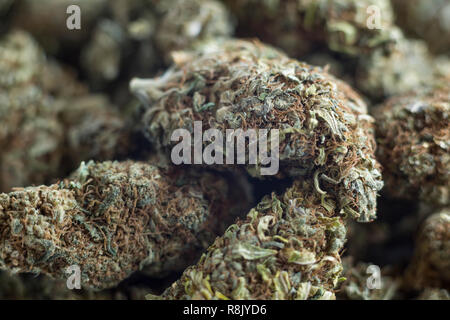 Dried, CBD heavy Cannabis buds - Stock Photo