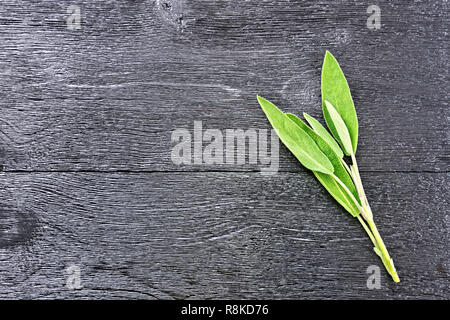 Sprig of fresh green sage on black wooden board background - Stock Photo