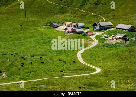 France, Haute-Savoie, Le Tour, Tour du Mt Blanc, col de Balme and pastures, Chalets de Balme - Stock Photo
