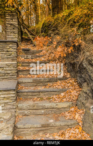 image of a stone stairs with many dry leaves and blocked with tree branches in Vielsalm on a beautiful and cloudy autumn day in the Belgian Ardennes - Stock Photo