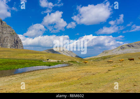 Tymfi mountain at national park of Pindus in Greece. A herd of cows grazing - Stock Photo
