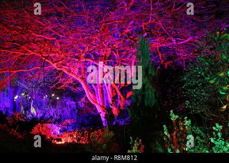 Christmas Glow 2018, Seven Acres. RHS Garden Wisley, Woking, Surrey, England, UK, Europe. - Stock Photo