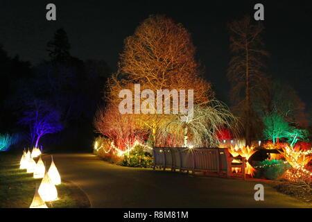 Christmas Glow 2018, Seven Acres lake. RHS Garden Wisley, Woking, Surrey, England, UK, Europe. - Stock Photo