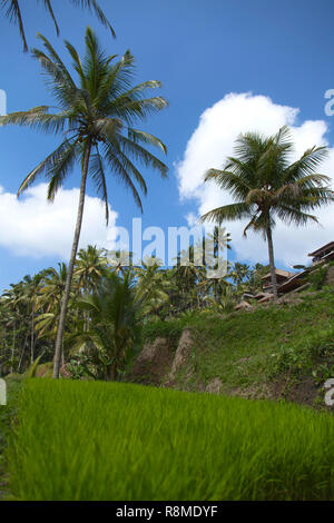 A Tegalalang rice terrace views of Bali in Indonesia. - Stock Photo