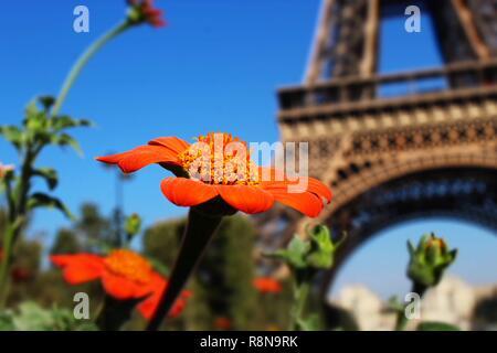 Delicate orange flowers surround the marvelous La Tour Eiffel augmenting its beauty. - Stock Photo