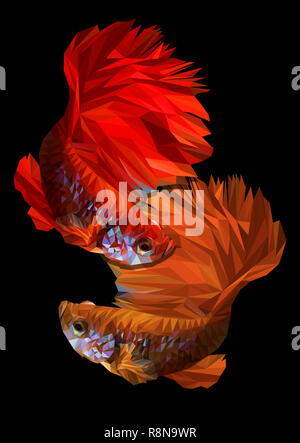 Polygon 3D vector color drawing of  betta or simese fighting fish illustation. - Stock Photo