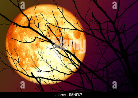 super blood moon floats on the sky in the shadow of the hands of dried branches, Elements of this image furnished by NASA - Stock Photo