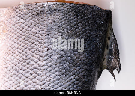 Salmon fish scales grunge texture background on white background - Stock Photo