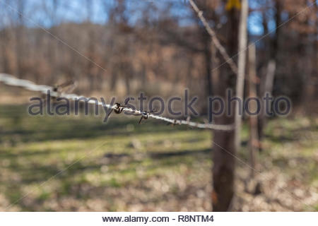 Barbed wire fence in the forest - Stock Photo