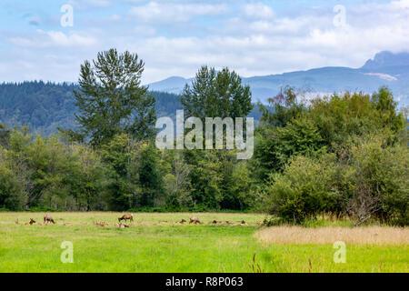elk herd and meadow under overcast skys - Stock Photo