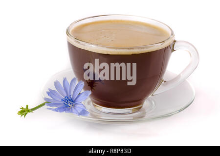 Chicory cup and chicory flower isolated on white background - Stock Photo