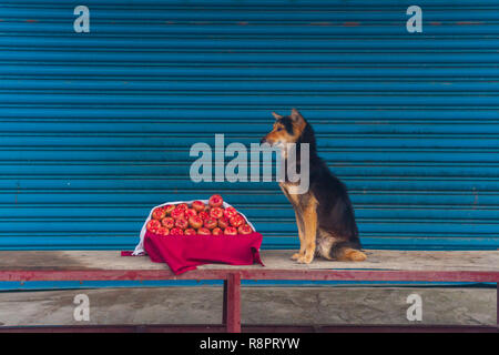Dog And Fruit - Stock Photo