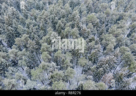 winter forest view from above. high snow-covered pine and fir trees. winter forest patterns - Stock Photo