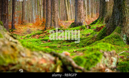 Mossy Forest Floor - Stock Photo