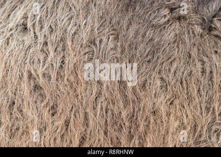 Camel fur background texture image background - Stock Photo