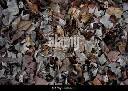 Autumn leaves. - Stock Photo