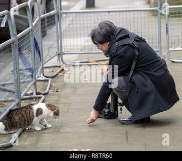 London 18th December  2018,  A photographer feeds Larry the Downing Street cat  London Credit Ian Davidson/Alamy Live News - Stock Photo