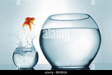 Jumping to the highest level - goldfish jumping in a bigger bowl - aspiration and achievement concept. This is a 3d render illustration - Stock Photo