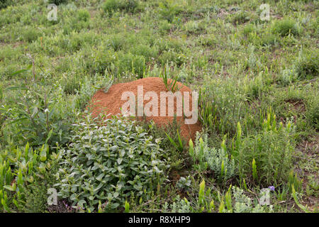 Ant nest, mount on ground amongst vegetation, Campos do Jordao, state of Sao Paulo, Brazil - Stock Photo