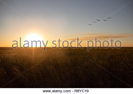 Sunset on Everglades in winter season - Stock Photo