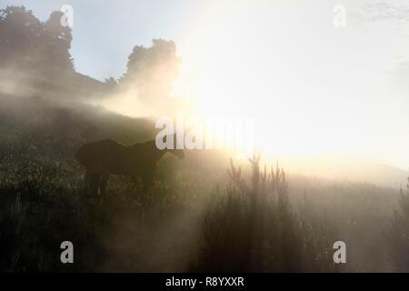Georgia, Kakheti, Tusheti National Park, Omalo, horse in the mist - Stock Photo