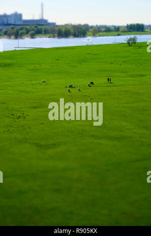 Sheep and people on the meadows of the left Rhine river bank with lausward power plant in Dusseldorf Oberkassel, Germany - Stock Photo