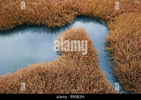Intertidal pool of standing water with marsh grasses, dusk, Drakes Estero, Pt. Reyes National Seashore, California, USA. - Stock Photo