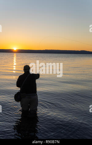 A silhouette view of a fly fisherman casting for salmon and searun coastal cutthroat trout from a salt water beach on the west coast of the USA - Stock Photo