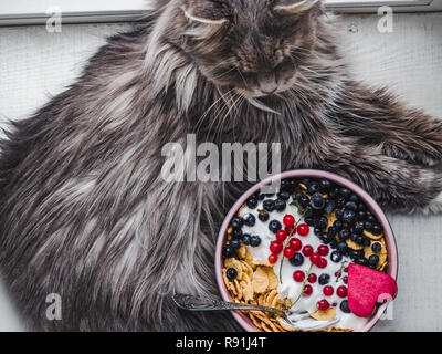 Festive and Healthy breakfast for loved ones. Charming kitten, Cereal biscuits in pink glaze, cornflakes, yogurt, fresh berries on the background of w - Stock Photo