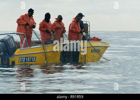 KwaZulu-Natal, South Africa, inspection crew of Natal Sharks Board, on yellow boat pulling anti shark gill net out of sea in bay of Durban - Stock Photo
