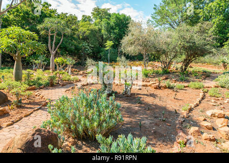 National Botanical garden in Pretoria, South Africa. It contains plants from all over Southern Africa. - Stock Photo