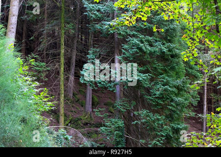 Deep woods from Peneda Geres Natural Park in the north of Portugal in early autumn. - Stock Photo