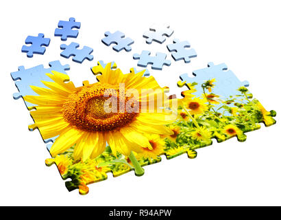 Sunflower - 3d puzzles. Objects isolated over white - Stock Photo