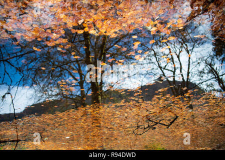 Reflection of blue sky and trees, framed in autumn leaves - Stock Photo
