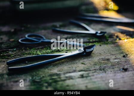 Metal bonsai tools on old wooden table - Stock Photo