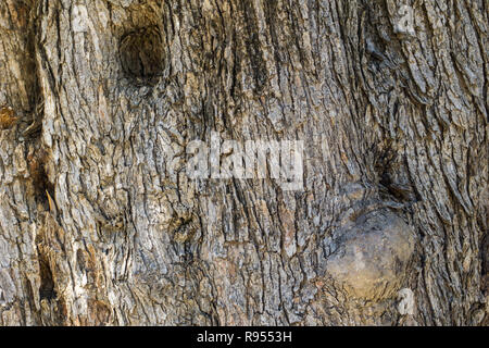 Close-up of a detailed Tree Bark. Wooden Background Texture. - Stock Photo