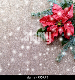 Red poinsettia flower with fir tree and snow on golden glitter background. Christmas composition. Elegant postcard. - Stock Photo