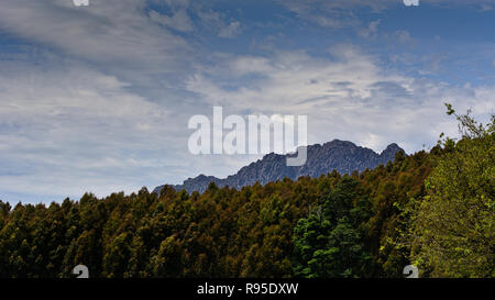 Forest with mountain in background - Stock Photo