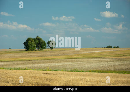 Trees growing on a mowed field, horizon and clouds on a blue sky - Stock Photo