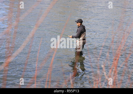 Fly fisherman casting for steelhead trout on the Salmon River in Idaho, USA - Stock Photo