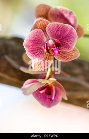 White, pink, red, purple orchid flowers, orchid flower in green outside, outdoor garden in Key West, Florida, tropical plant, green blurred, blurry bo - Stock Photo