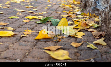 Yellow and brown autumn leaves lying on the stone pavement. Cityscape - Stock Photo
