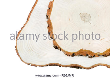 Woden cut texture. Cut of tree isolated on white. Nature abstract background. - Stock Photo